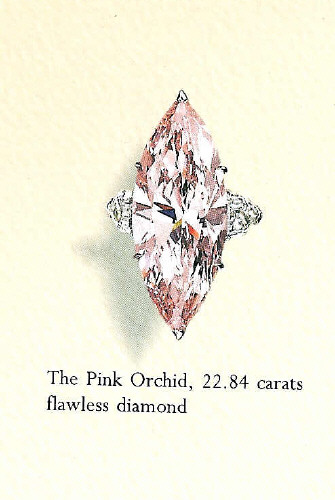 The Pink Orchid.jpg
